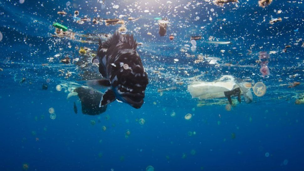 A fish swimming in an ocean that is also filled with plastic debris